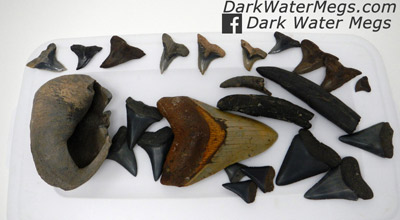 Recently Listed Megalodon Teeth For Sale, With Other Fossils