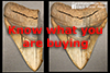 How to buy a real megalodon tooth