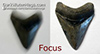How to Take Pictures of Megalodon Teeth For Sale and other Shark Teeth